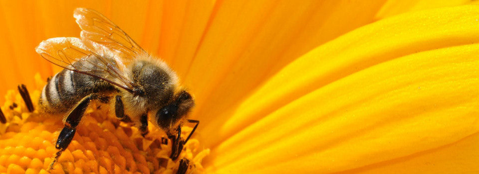 Bienenzuchtverein Frontenhausen